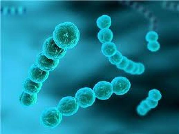 Bactéries anaérobies strictes