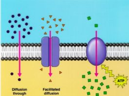Déplacement moléculaire dans les solutions (Diffusion)