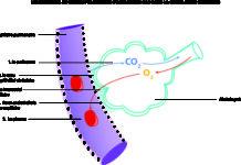 Échanges alvéolo-capillaires