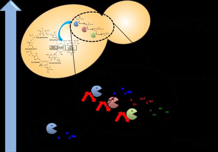 Intégration métabolique