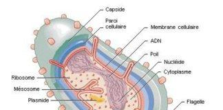 Pouvoir pathogène des bactéries