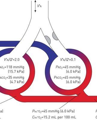 Le rapport ventilation/perfusion