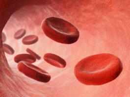 Hémolyse normale et pathologique