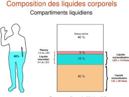 Compartiments liquidiens