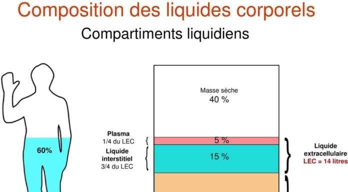 Compartiments liquidiens