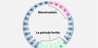 Cycle menstruel et régulation hormonale