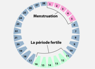 Cycle menstruel et régulation hormonale