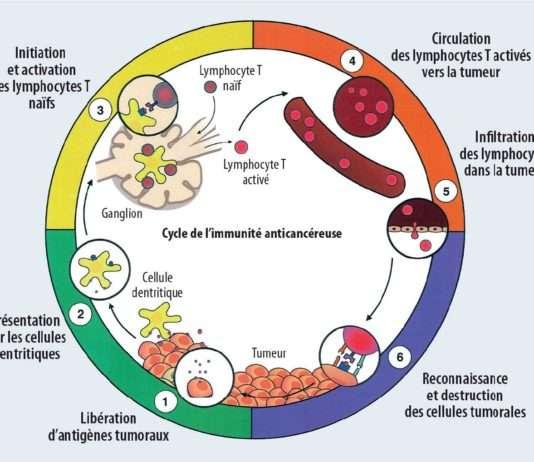 Immunité anti-tumorale