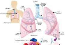 Pathologie interstitielle