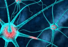 Physiologie du neurone