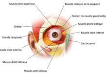 Troubles de la motilité oculaire
