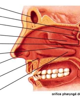 Infections naso-sinusiennes de l'enfant et de l'adulte