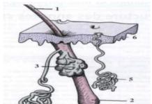 Démarche diagnostique en dermatologie