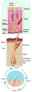 alopecia 1