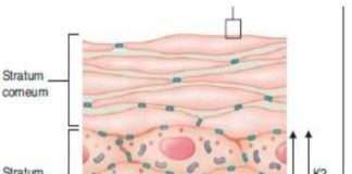 Carcinomes cutanés 1